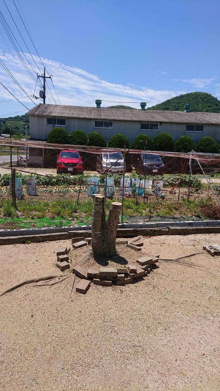岡山市南区での伐採後