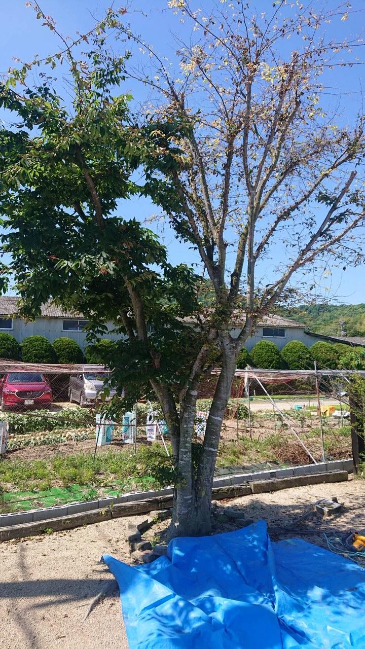 岡山市南区での伐採作業